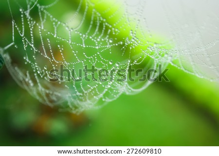 Watering spider web in a garden - stock photo