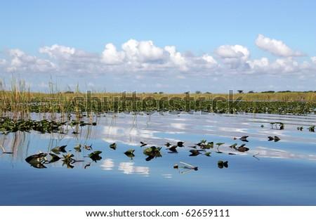 Waterlilies on wetland in Everglades Florida - stock photo