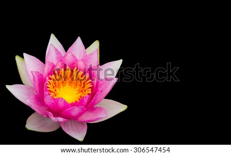 Waterlily, Beautiful blooming pink lotus isolated on black background - stock photo