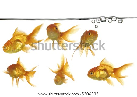 Waterline with small air bubbles and gold fish - stock photo