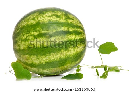 watermelon and vine on white background - stock photo