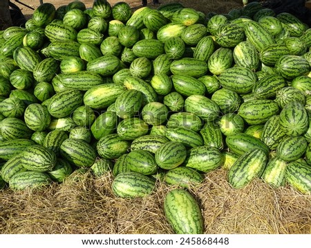 watermelon for sale on ground - stock photo