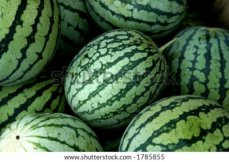 Watermelons - stock photo