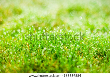 Waterpearls on green grass - stock photo