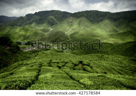 wave hill and green tea plantation landscape at cameron highland,malaysia. - stock photo