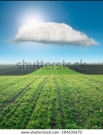 Waved young wheat field against the sun - stock photo