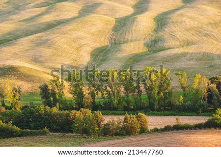 Wavy field with trees gilded light of sunset - stock photo