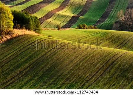 Wavy green fields, Moravia, Czech Republic - stock photo