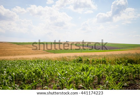Wavy spring agricultural land with maize, sunflower, wheat, against a blue sky with white clouds