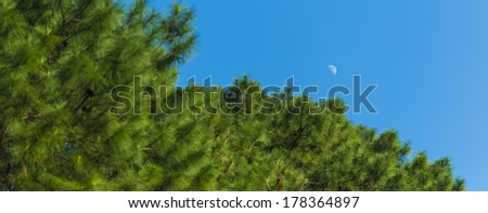 waxing / waning crescent moon phase with silhouette forest pine trees and midnight blue sky cresent