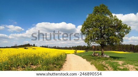 way between rapeseed field and lime tree with crucifix - stock photo