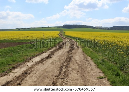 Way between yellow field