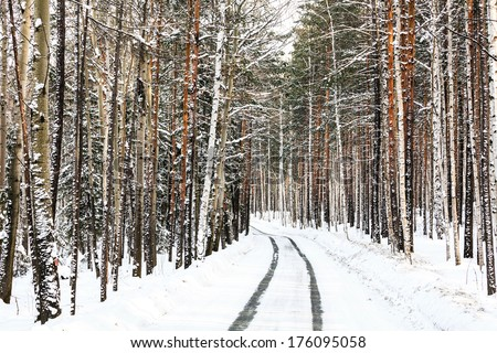 Way in a winter forest - stock photo