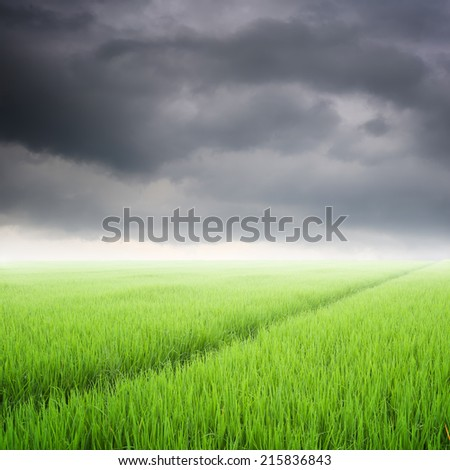 Way in Green rice field and rainclouds for background