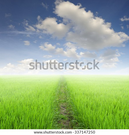 Way in Green rice field and sun sky for background