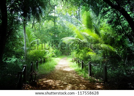way in jungle of Seychelles islands - stock photo