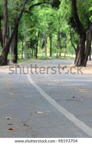 way in the forest - stock photo