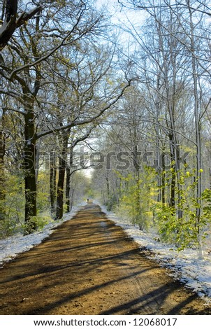 way in the snow-covered forest