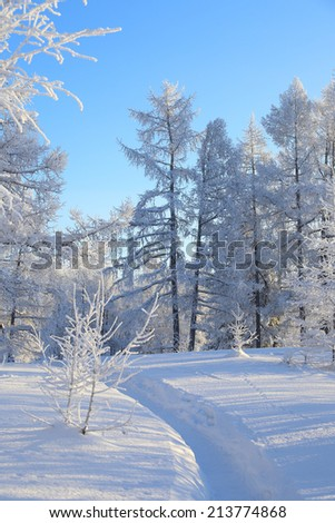 Way in the winter snow-covered wood - stock photo