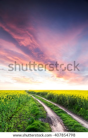 Way on yellow field.Field of rape with spectacular sky