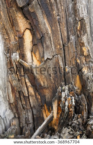 Weather beaten,decaying wood of a pine tree makes an abstract pattern of gold and brown in Yellowstone National Park, Wyoming. - stock photo