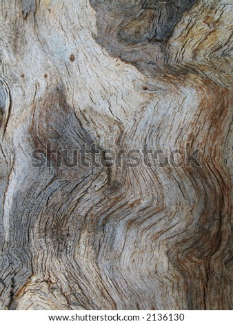 Weathered eucalyptus wood abstract background