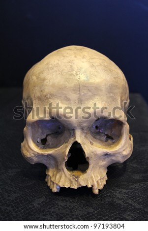 weathered human skull - stock photo