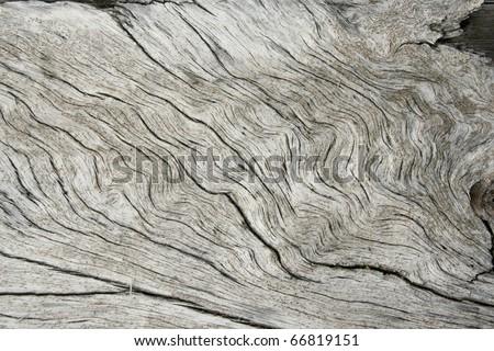 Weathered pine tree driftwood background. - stock photo
