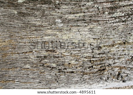 Weathered wood - stock photo