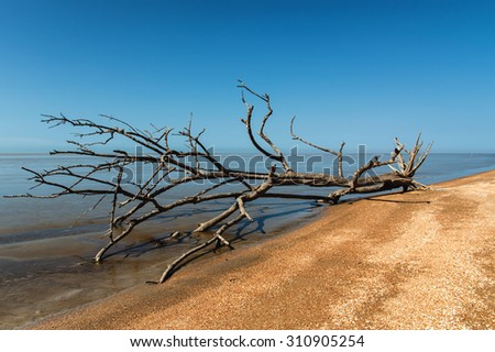 Weathered wood at the sandy beach, Suriname - stock photo