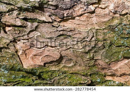 Weathered wood textured background with green moss - stock photo