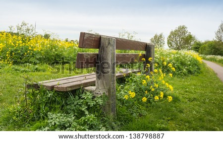 Weathered wooden bench surrounded by yellow blooming Wild Mustard and other weeds.