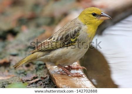 Wild Birds In Africa Beautiful Female Hill ...