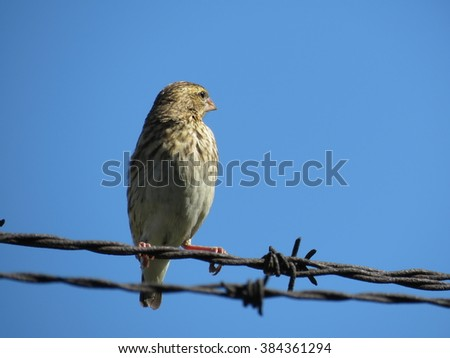 Weaver (Female)