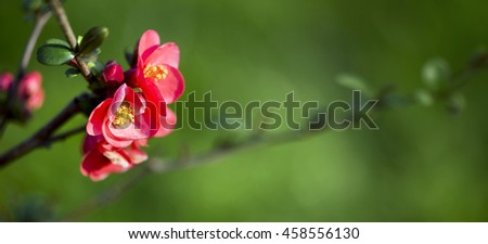 Web banner of spring rose flowers with copy space - stock photo