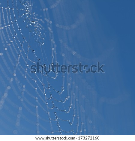 Web with dew drops on a blue background - stock photo
