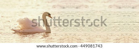 Website banner of a beautiful swan as swimming in the water
