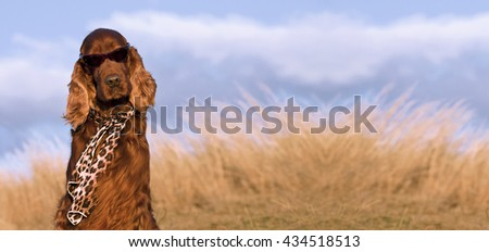 Website banner of a funny Irish Setter dog with copy space
