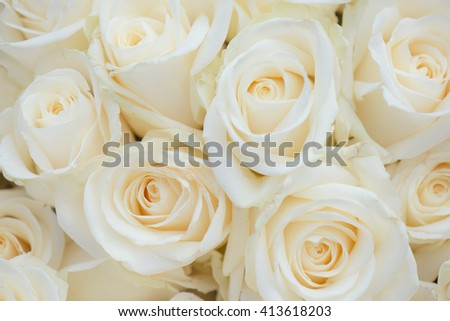 Wedding bouquet of white flowers. White roses.