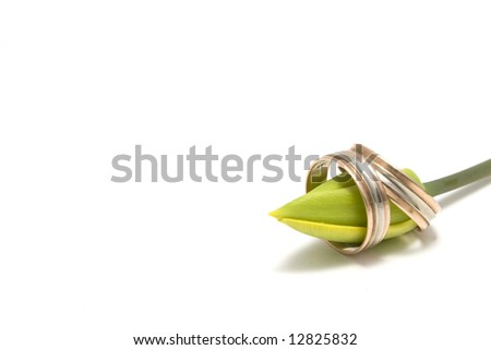 wedding concept with rings and flower-bud of tulip - stock photo
