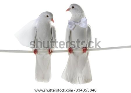 Wedding doves.  symbol of love and wedding.  - stock photo