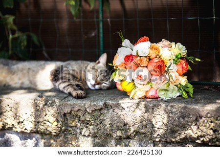Wedding, funny cat asleep beside a beautiful bouquet of roses - stock photo