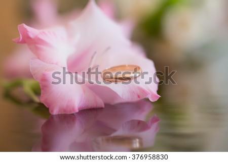 Wedding golden cute ring inside light pink elegant amazing gladioli cornflag flower floral decor natural beauty studio closeup on blur background, horizontal picture - stock photo