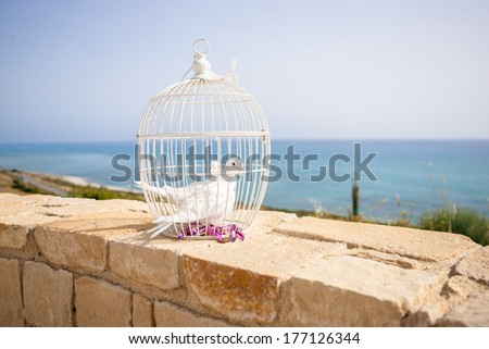 Wedding pigeons in a cage - stock photo