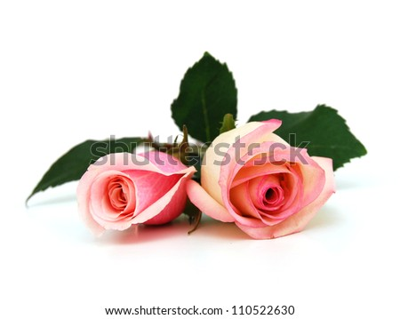 Wedding pink roses bouquet isolated on white background - stock photo