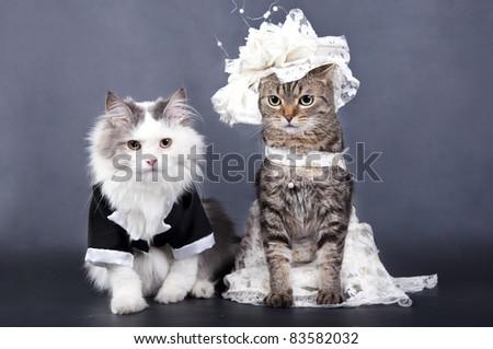 Cat wedding stock images royalty free images vectors shutterstock wedding portrait a cat junglespirit Images