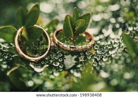 Wedding-ring on green and drop water - stock photo