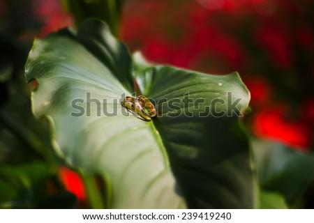 wedding ring on leaves - stock photo