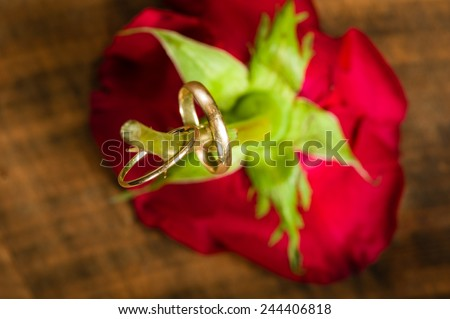 Wedding rings on a rose stem narrow focus - stock photo