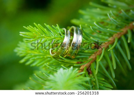 Wedding rings on a tree twig - stock photo